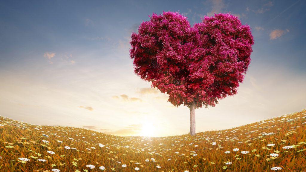 love-wallpaper-tree-flowers