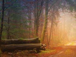 autumn-3193305_1280