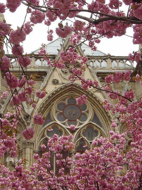 讓教會迎來奉獻生活的春天