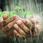 old_man_holding_plant_in_rain
