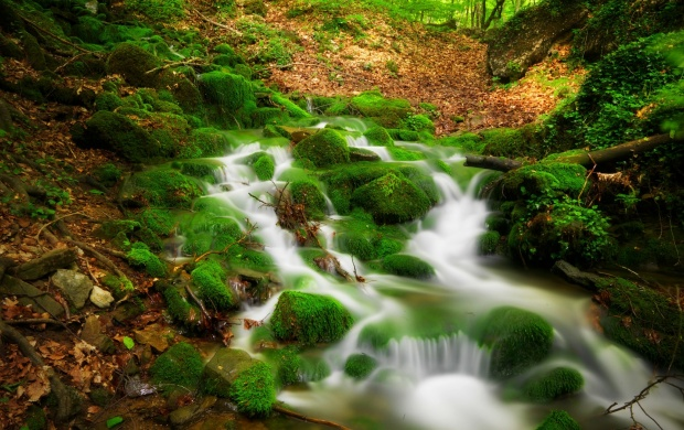 forest_river_scenery-t3