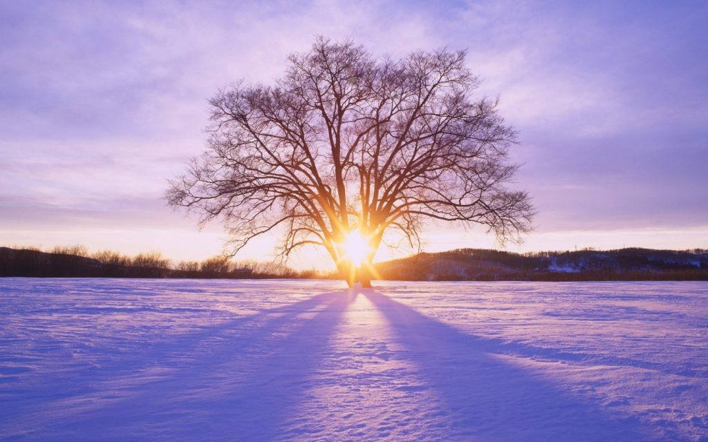 ws_shiny_sun_tree__snow_scenery_1680x1050
