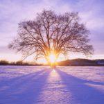 ws_shiny_sun_tree__snow_scenery_1680x1050