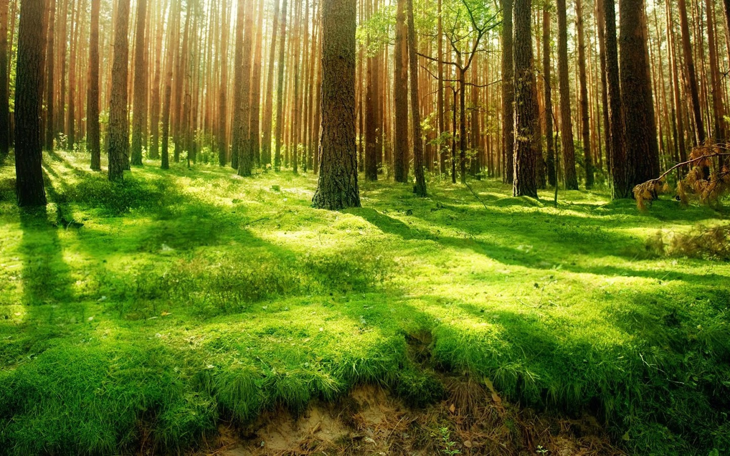 forest-green-land-wallpaper-2880x1800