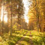 autumn-513783_19201-1180x610