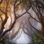 081d6f40eb0076ac168567af9e59b63d--tree-tunnel-scenery-photography