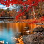 147f1f3b170c4c298e4186b03f7dc991--autumn-leaves-autumn-fall