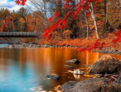147f1f3b170c4c298e4186b03f7dc991--autumn-leaves-autumn-fall