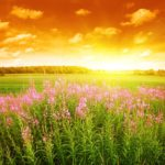 beautiful_scenery_highdefinition_picture_166210