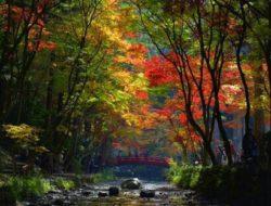 ed1aae62f5a8547715d8a2dd6d018cf4--scenery-photography-autumn-photography