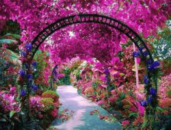f85706c5f5e0b974a533ad6c8d1af258--orchids-garden-autumn-photos