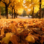 fallen-leaves-wallpaper-hd-1