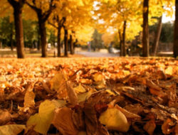 fallen-leaves-wallpaper-hd-1