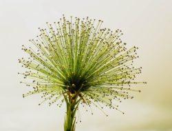 flower-2071522_960_720