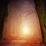 nature-3151869_1280